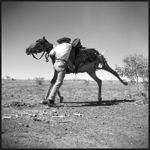 Untitled (Brian the Stockman Mounting Dead Horse), 1952